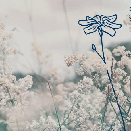 Weiße Blumenwiese.